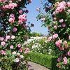 lilyflower1214